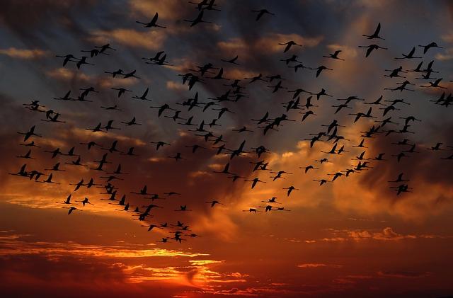 flamingos-1619415_640