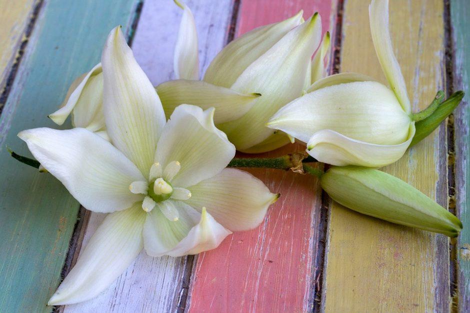 flower-1529237_960_720
