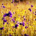 flower-1550828_960_720