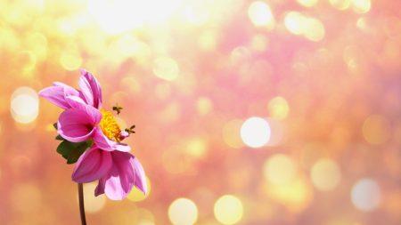 flower-1669899_960_720