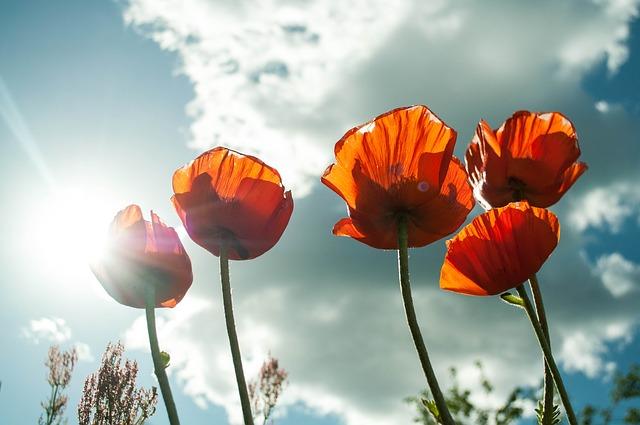 flower-399409_640
