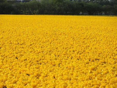flower-field-569996__480