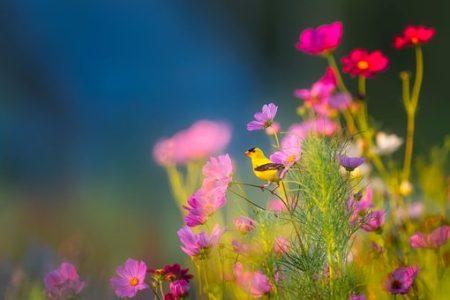 flowers-1835619__340