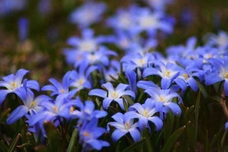 flowers-722095__480