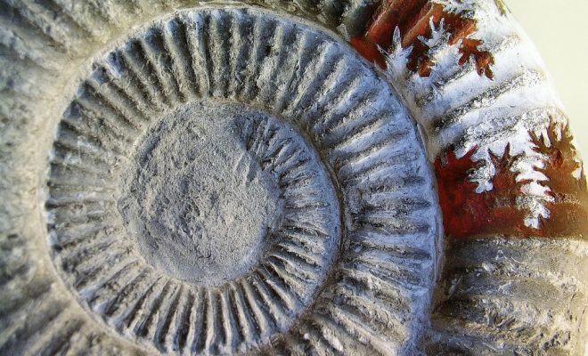 fossil-2506088_960_720