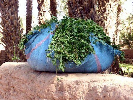 fresh-coriander-1148473_640
