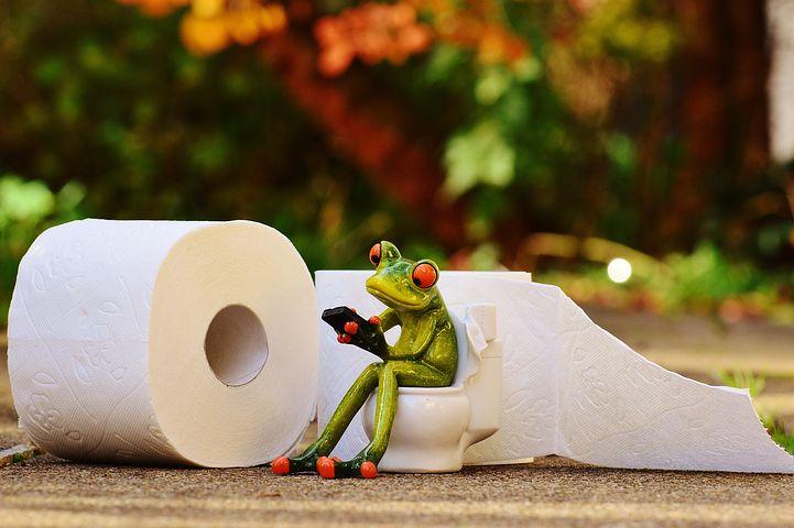 frog-1037252__480