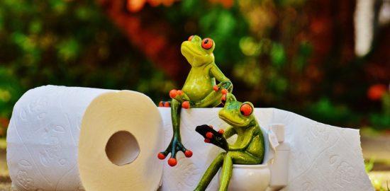 frog-1037714_960_720