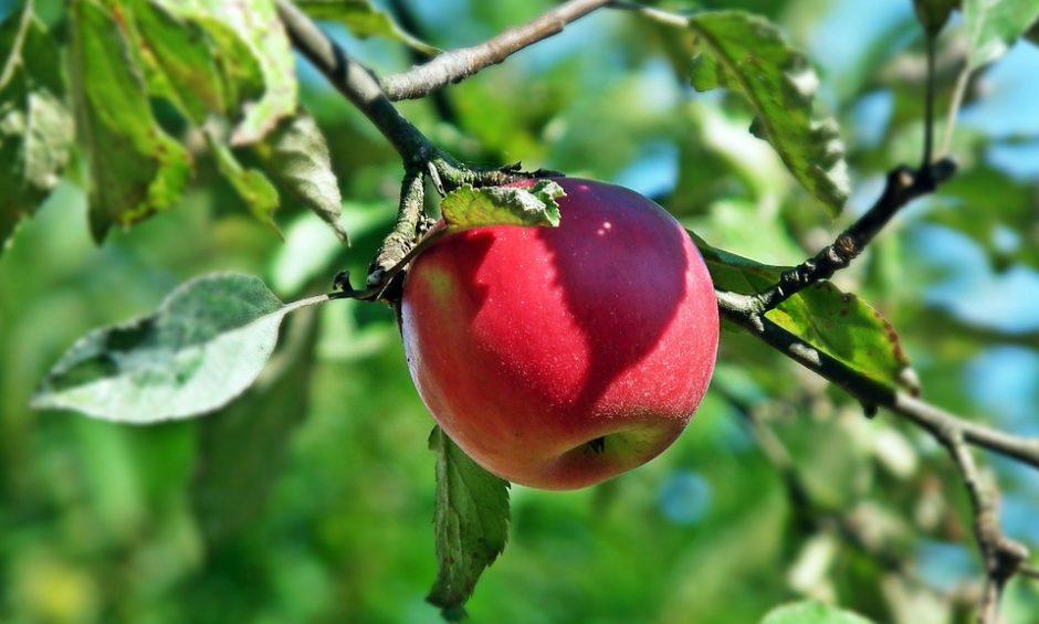 fruit-3086464_960_720