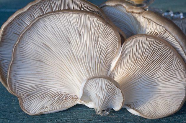 fungi-2069474_960_720