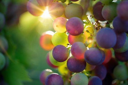 grapes-3550733_640