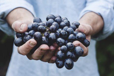 grapes-690230__340