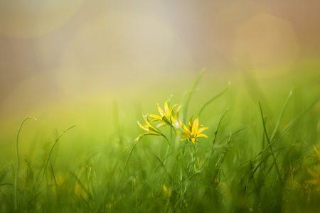grass-3085457_640