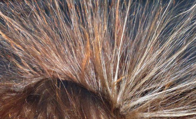 hair-113313_960_720