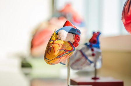 heart-2607178_640