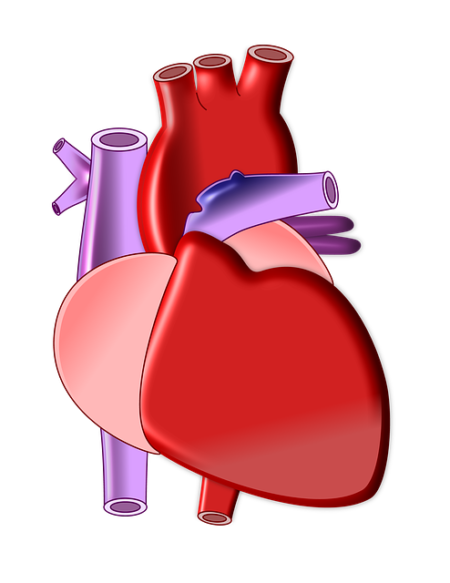 heart-497674_640