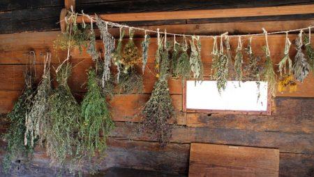 herbs-478060_640