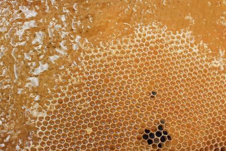 honeycomb-1564957_640