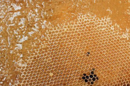 honeycomb-1564957__340