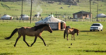 horse-2504686_640