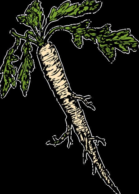 horseradish-32931_640