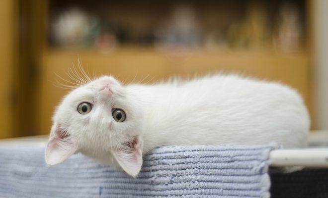 kitten-1285341_960_720