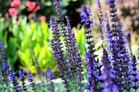 lavender-1108813_640