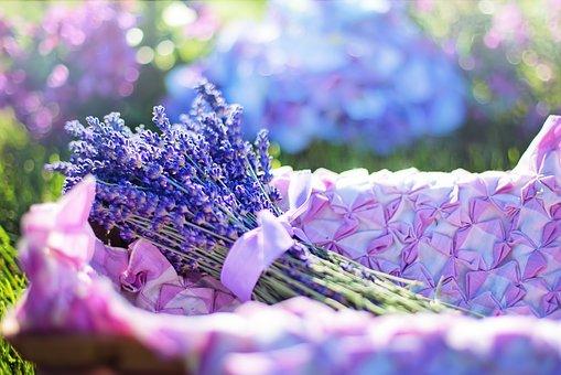 lavender-2482372__340