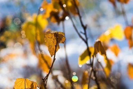 leaf-1814936__340