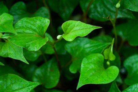 leaf-854515_640