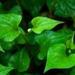 leaf-854515_960_720