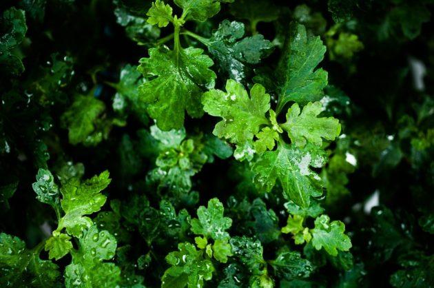 leaf-854517_960_720