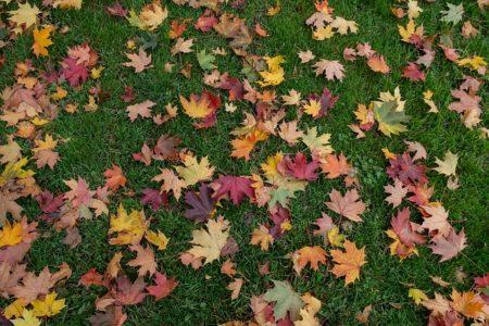 leaves-1004847_640