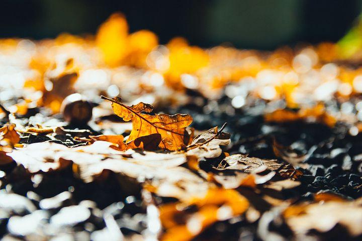 leaves-2812461__480