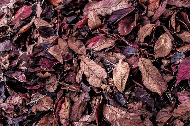 leaves-661865_640