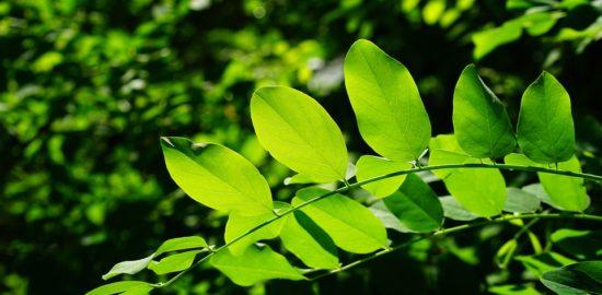 leaves-829513_960_720