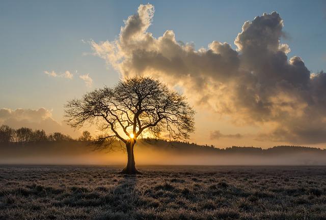 lone-tree-1934897_640