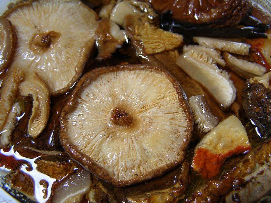 mushroom-1555015_960_720