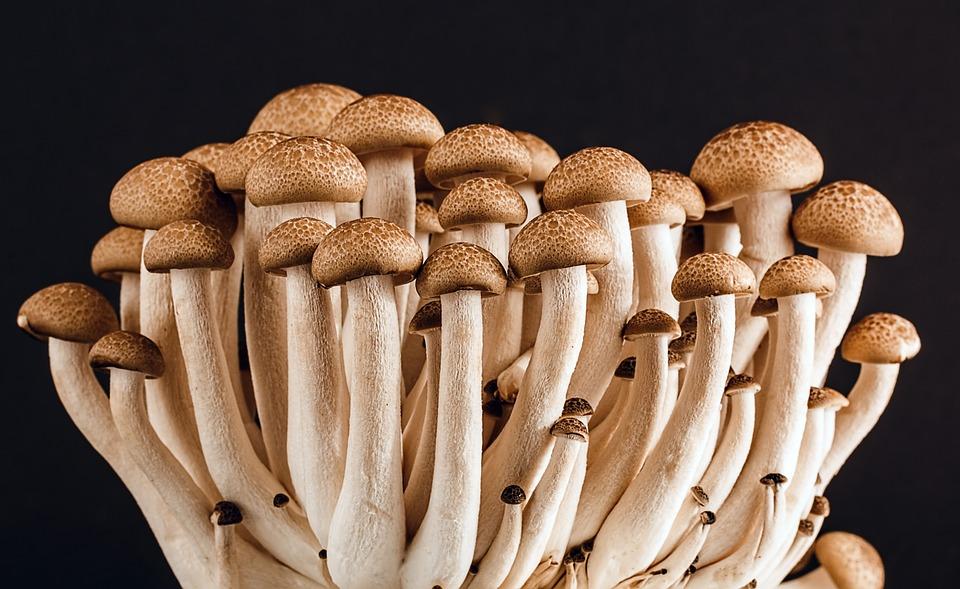 mushroom-389421_960_720