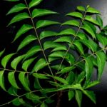 neem-leaves-651913_640