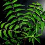 neem-leaves-651913_640