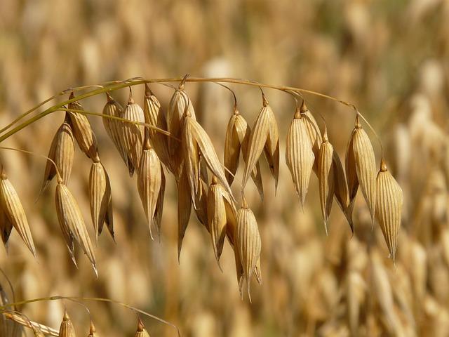 oats-8946_640