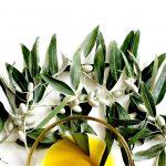 olive-2657693_960_720