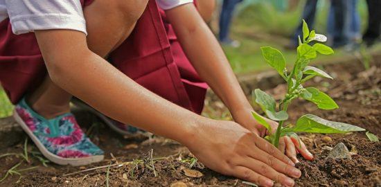 planting-1898946_960_720