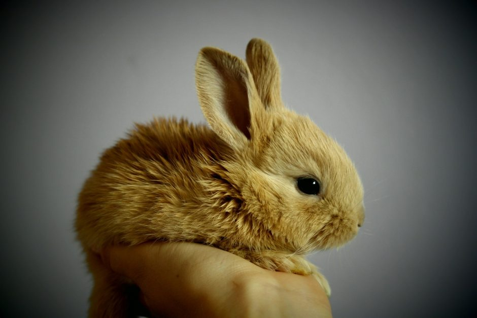 rabbit-373691_1920