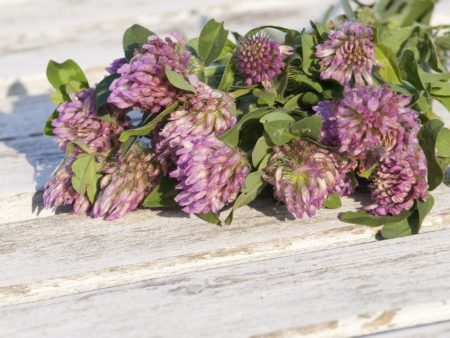 red-clover-1589448_960_720