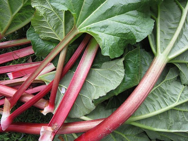rhubarb-1350969_640