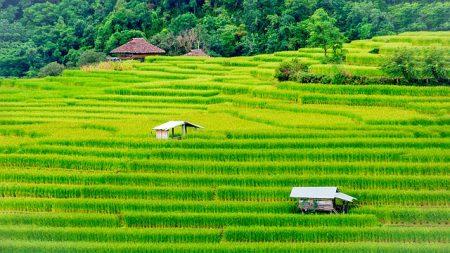 rice-2866707_640