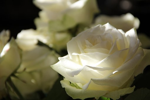roses-108132__340