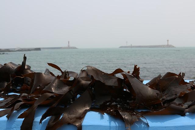 seaweed-2499352_640
